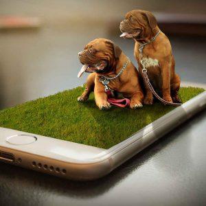 ecommerce para pet shop